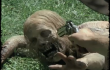 Every Zombie Death in The Walking Dead